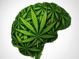 Marihuana como Protectora - Marihuana AntiDegenerativa