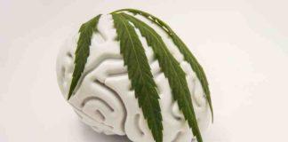 Efectos Marihuana Cerebro - Efectos Consumo Marihuana al Cerebro