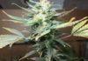 Beneficios Marihuana Pacientes - Beneficios Marihuana Enfermedades