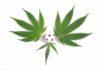 Marihuana y Deportistas - ¿Marihuana buena para el Deporte?