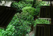 Cultivo de Interior - Cultivo de Marihuana Indoor