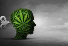 ¿La Marihuana puede revertir el daño cerebral? - Marihuana Daño Cerebral