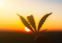 Vaporizar CBD - Vaporizar Marihuana rica en CBD