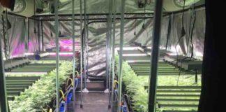 ¿Qué es la aeroponía? - Cultivo Aeropónico de la Marihuana