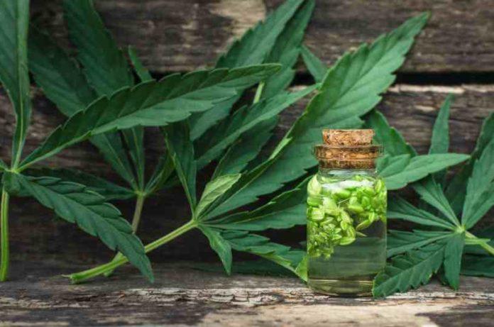 Junio Cultivo Marihuana - Solsticio Verano Marca Diferencia Cultivo Marihuana