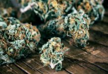 Consumir Mucha Marihuana - Saber que Fumamos Mucha Marihuana