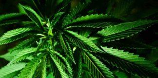 ¿Qué nos Aporta Fumar un Porro? - ¿Qué Efectos nos Causa la Marihuana?