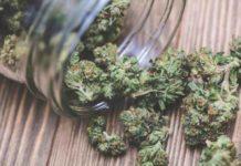 Salir con un Enamorado de la Marihuana - Enrollarse con un Amante de la Marihuana