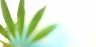 Países Prohibidos para un Marihuana - Países no ir un Marihuano