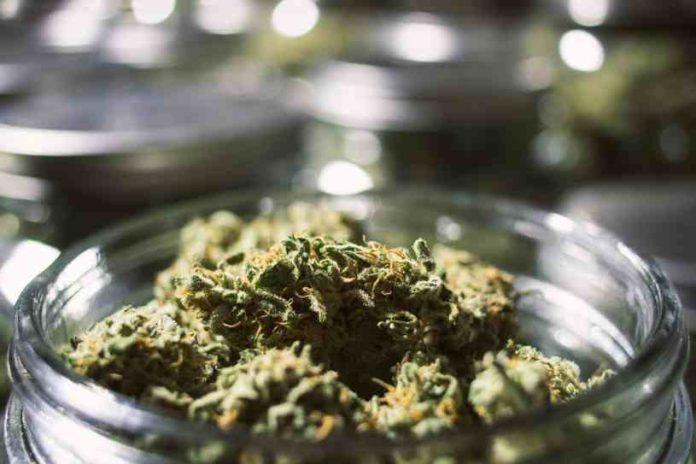 Semillas de Marihuana Afrodisiacas - Plantas de Marihuana Afrodisiacas