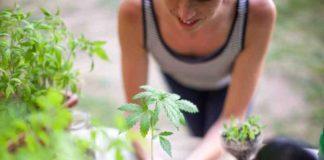 Elegir una Mujer que Fume Marihuana como Compañera