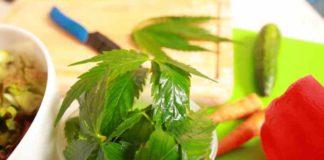Ensalada Aliñada con Cogollo de Marihuana - Ensalada de Marihuana