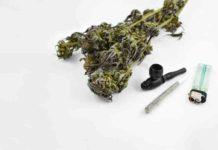 Los Chamanes muy Unidos al poder de la Marihuana
