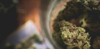 https://www.semillasdemarihuana.info/tag/legalizacion-de-la-marihuana/