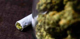Empresas Relacionadas con la Marihuana Unen Fuerzas