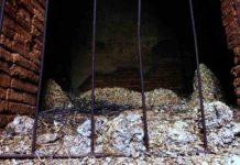 Guano de Murciélago uno de los Abonos más Utilizados