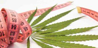 La Marihuana Adelgaza - Marihuana Ayuda a Bajar Peso