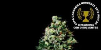 Chocolute F2 - Semilla de Marihuana Chocolute F2