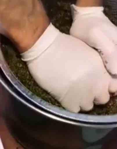 Extrayendo todos los Cannabinoides