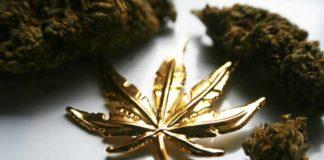 Nuevo valor refugio el Oro junto con la Marihuana en Tiempos de Crisis