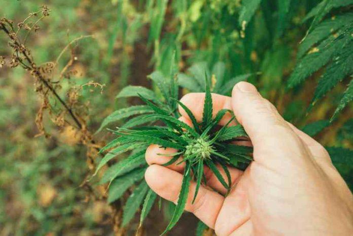 ¿Existe el síndrome de abstinencia de la marihuana?