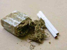Riesgos Sobre las Dosis Elevadas de Marihuana