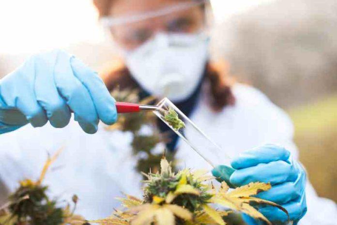 Luz verde para la Marihuana Terapéutica