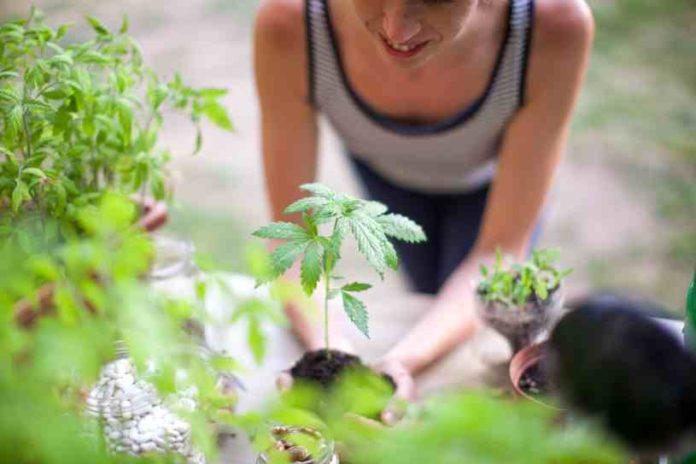 6 Conceptos Erróneos sobre los Efectos de la Marihuana en la Salud