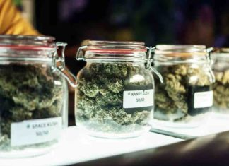 Probar la Marihuana Terapéutica - Probar la Marihuana Medicinal