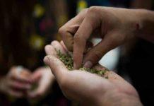 La Marihuana Sintética y las Nuevas drogas ¿Cómo Afrontar el Problema?