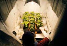 ¿Utilizas Tratamiento del Agua para Regar las Plantas de Marihuana?