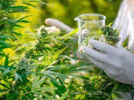 ¿Tenemos que usar el Cobre en nuestras Plantas de Marihuana?