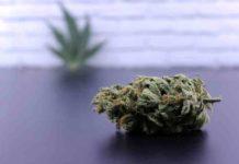 Semillas de Marihuana para el Dolor de Espalda