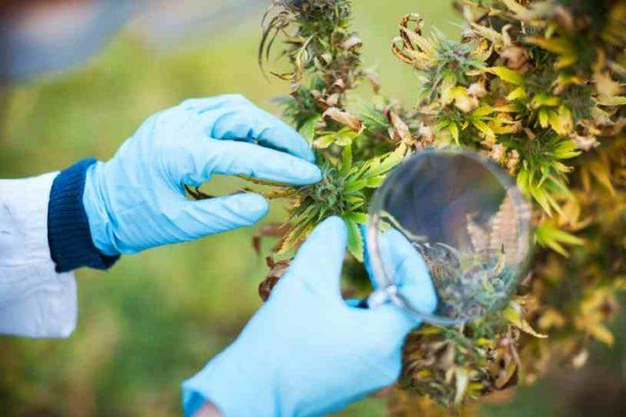 ¿Tenemos que usar Molibdeno en nuestras Plantas de Marihuana?