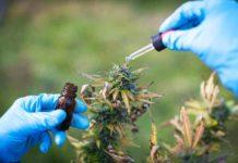 ¿Tenemos que usar Sodio en nuestras Plantas de Marihuana?