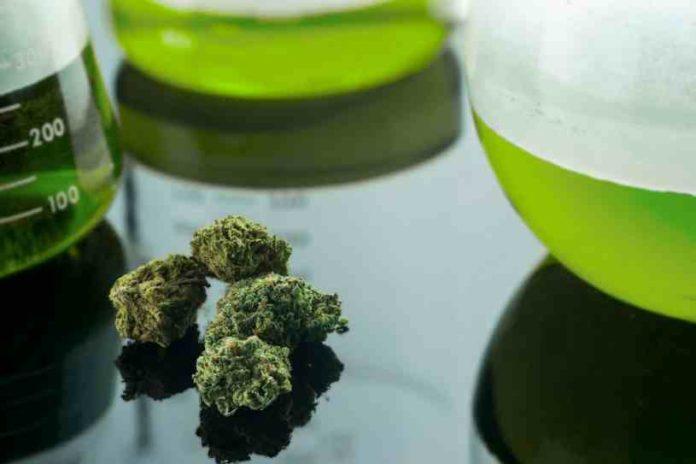 ¿Tenemos que usar Azufre en nuestras Plantas de Marihuana?