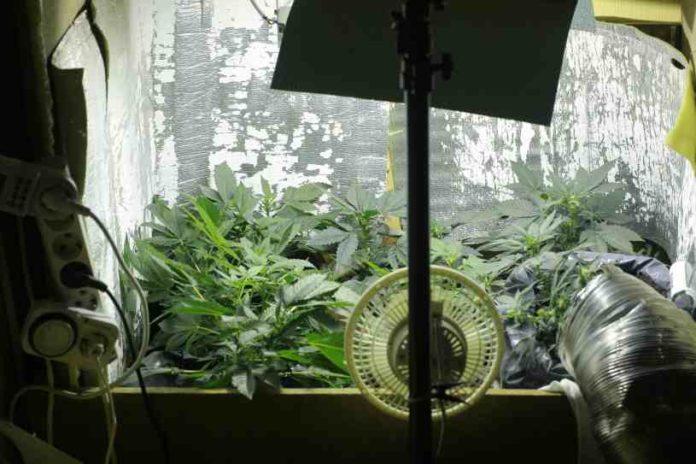 ¿Cómo Hemos de Comenzar a Cultivar Marihuana en Interior?