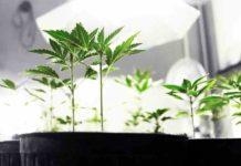 ¿Cuales son los Factores de Iluminación que Afectan al Cultivo Interior?