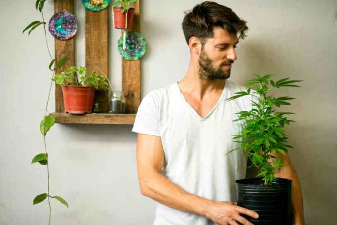 https://www.semillasdemarihuana.info/diez-10-razones-debes-cultivar-propia-cannabis-marihuana/