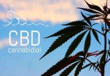 CBD es Eficaz en Diferentes Tratamientos