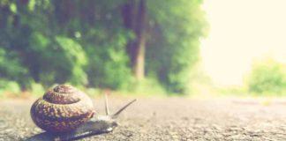Cómo Deshacerse de Caracoles y Babosas en el Cultivo de Marihuana