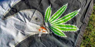 Pájaros Cultivo de Marihuana - Pájaros con la Marihuana