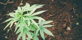 Cultivo Marihuana en Exterior - Suelo Cultivo Marihuana en Exterior