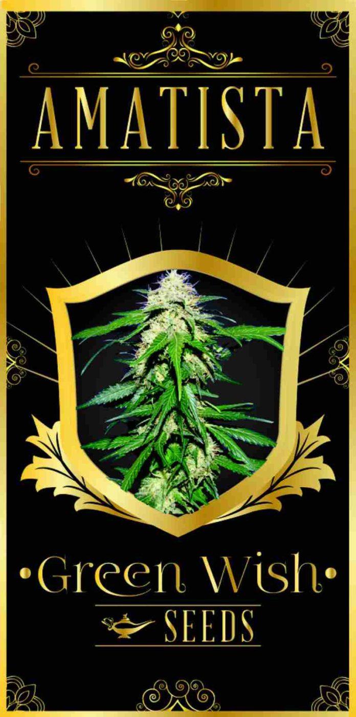 Amatista - Semilla de Marihuana Amatista Green Wish Seeds