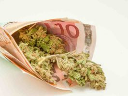 Europa Podría ser el Mayor Mercado de Marihuana del Mundo