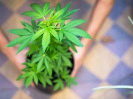 ¿Cómo Podemos Ahorrar en el Cultivo de Marihuana en Interior?
