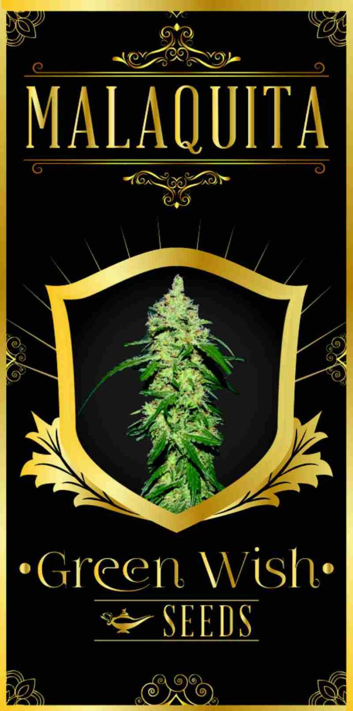 Malaquita - Semilla de Marihuana Malaquita del Banco Green Wish Seeds