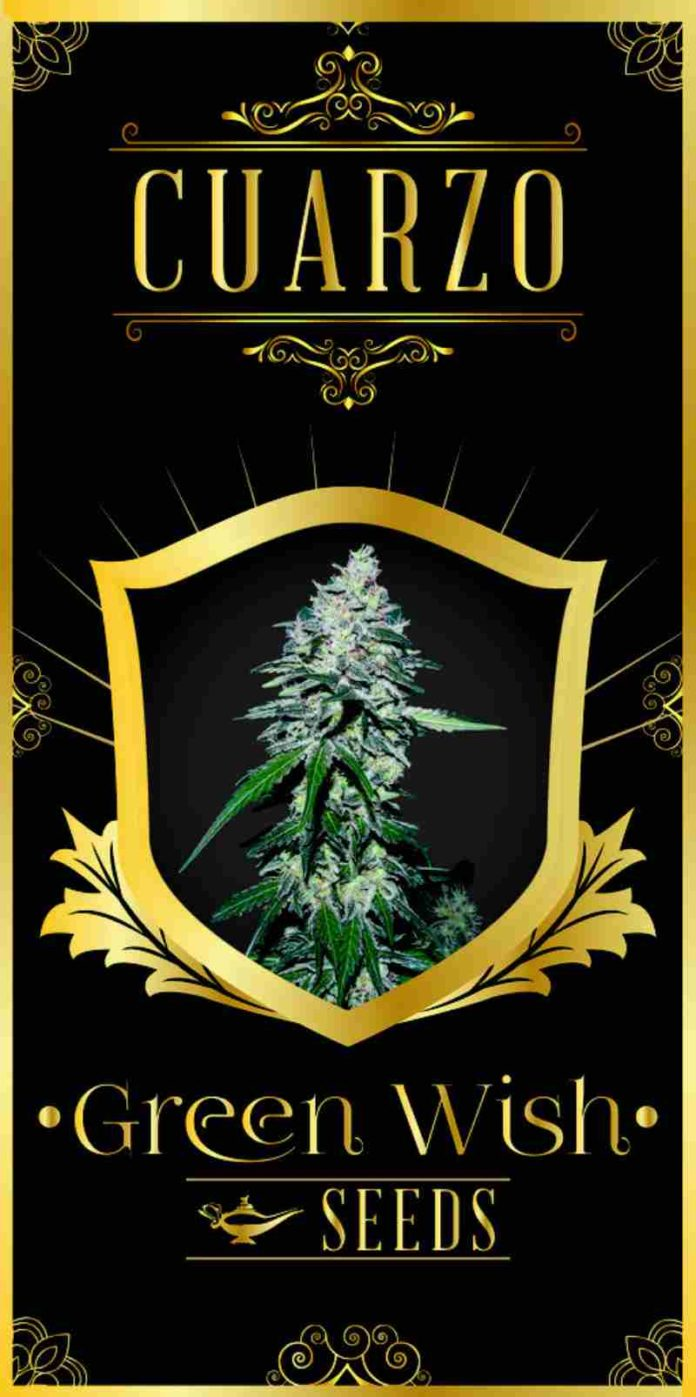 Cuarzo - Semilla de Marihuana Cuarzo del Banco Green Wish Seeds