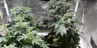 Cómo Tener el Mejor ambiente para el Cultivo de Marihuana