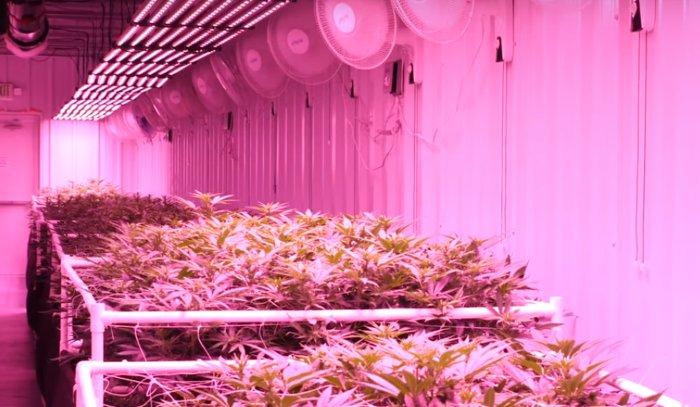 Luces LED en el Cultivo de Plantas de Marihuana